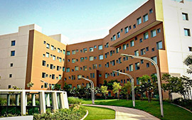 New York University, Abu Dhabi